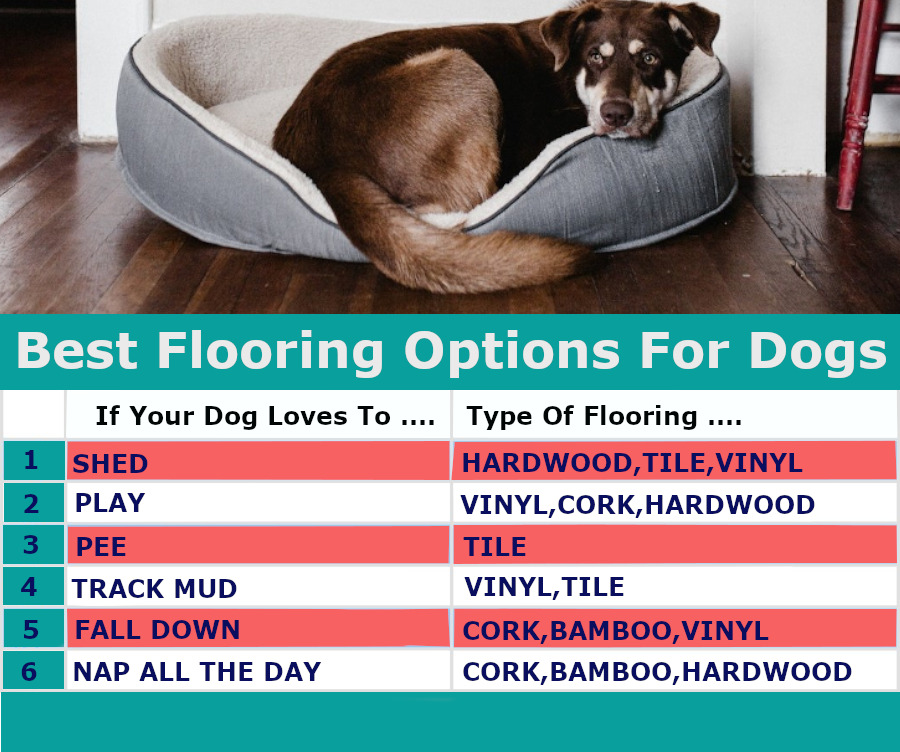 flooring-guide-for-dogs