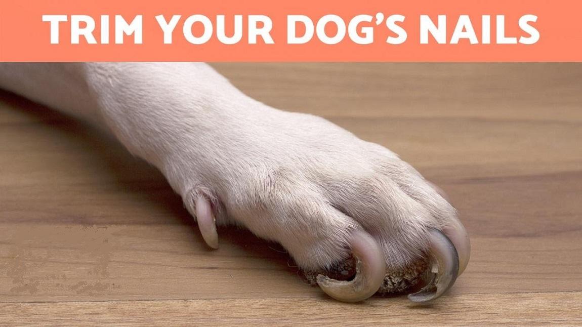 Keep the Pet Toenails Trimmed