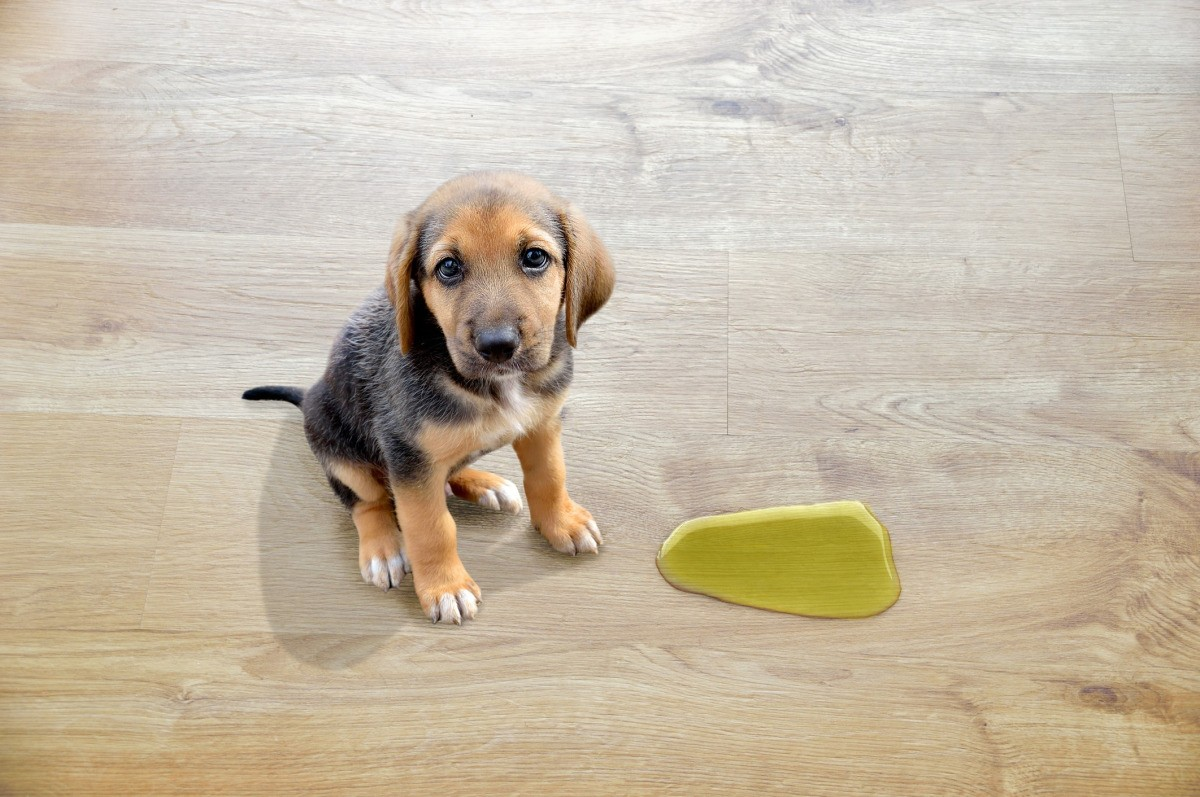 how to remove dog urine from hardwood floors